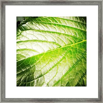 Leaf Framed Print by Les Cunliffe