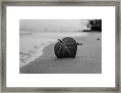 Leaf On A Beach Framed Print by Mountain Dreams