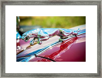 Leaping Jaguar Framed Print by Sebastian Musial