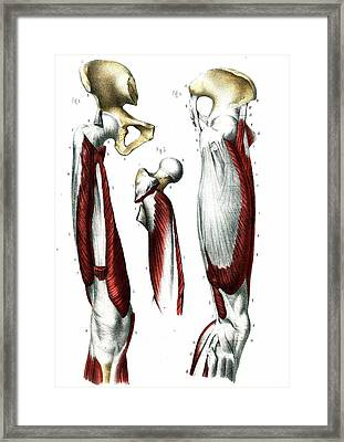 Leg Joints Framed Print by Collection Abecasis