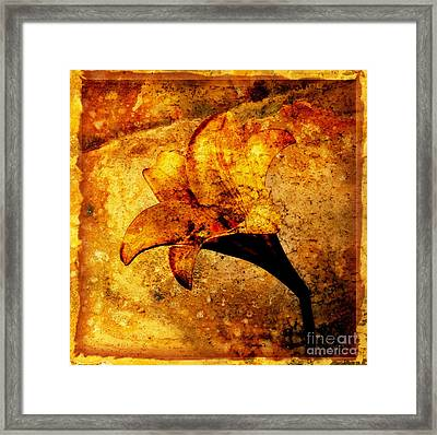 Lily Framed Print by Bernard Jaubert