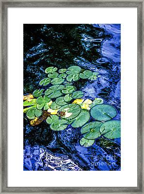 Lily Pads Framed Print by Elena Elisseeva