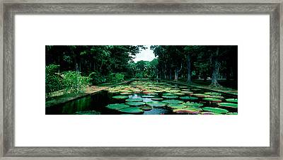 Lily Pads Floating On Water Framed Print by Panoramic Images