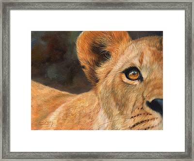 Lioness Framed Print by David Stribbling