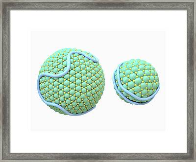 Lipoproteins Framed Print by Maurizio De Angelis
