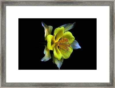 Listening Framed Print by Doug Norkum