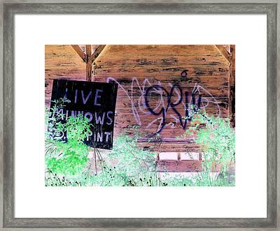 Live Minnows Framed Print by Dietrich ralph  Katz