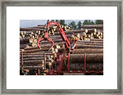 Logs At A Sawmill Framed Print by Jim West