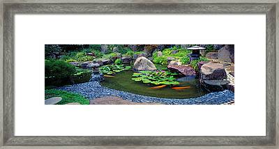 Lotus Blossoms, Japanese Garden Framed Print by Panoramic Images