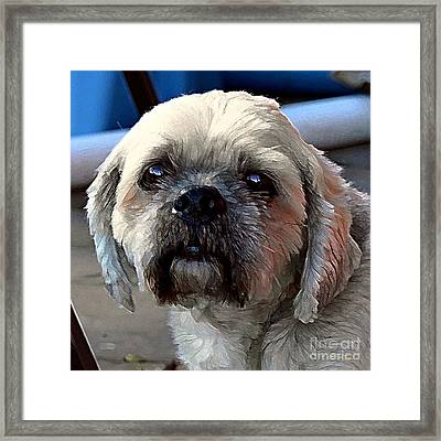 Louie Framed Print by Dale   Ford