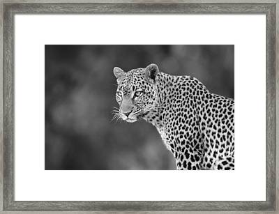 Lovely Leopard Framed Print by Michele Burgess