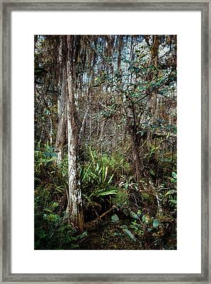 Loxahatchee Refuge Framed Print by Rudy Umans