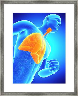 Lungs Framed Print by Sebastian Kaulitzki