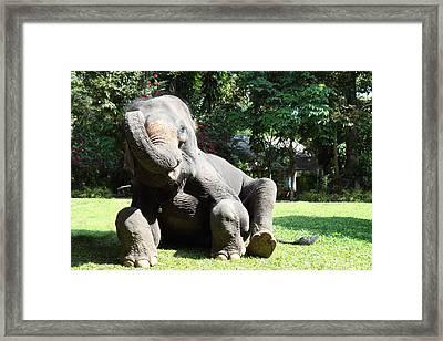 Maesa Elephant Camp - Chiang Mai Thailand - 01131 Framed Print by DC Photographer