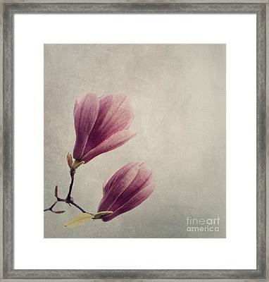 Magnolia Framed Print by Jelena Jovanovic