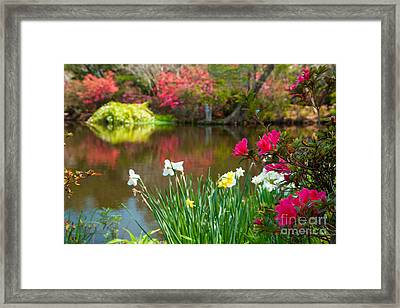 Magnolia Plantation And Gardens Framed Print by Iris Greenwell