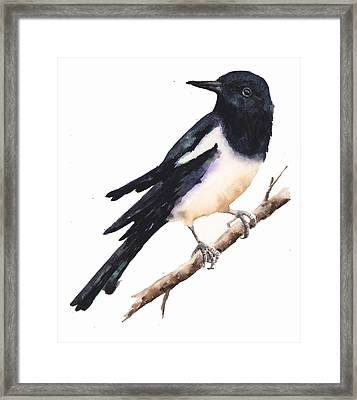 Magpie Painting Framed Print by Alison Fennell