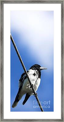 Magpie Up High Framed Print by Jorgo Photography - Wall Art Gallery