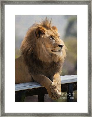 Majestic Lion Framed Print by Sharon Foster