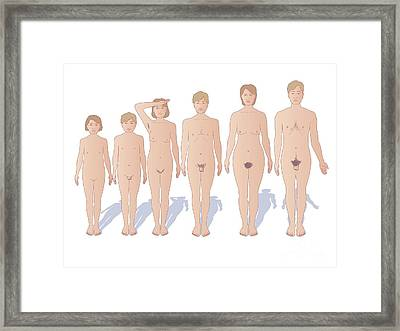 Male And Female Sexual Maturation Framed Print by Peter Gardiner