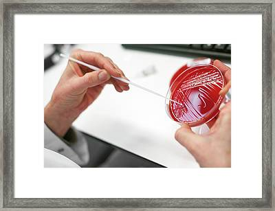 Medical Microbiology Framed Print by Arno Massee
