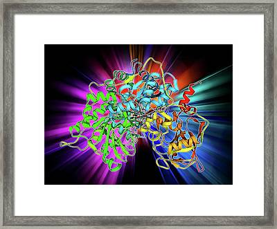 Metabolic Enzyme Molecule Framed Print by Laguna Design
