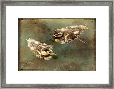 Mini Quackers Framed Print by Fraida Gutovich