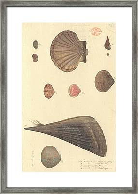 Molluscs Framed Print by Natural History Museum, London