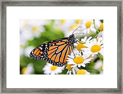Monarch Butterfly Framed Print by Elena Elisseeva