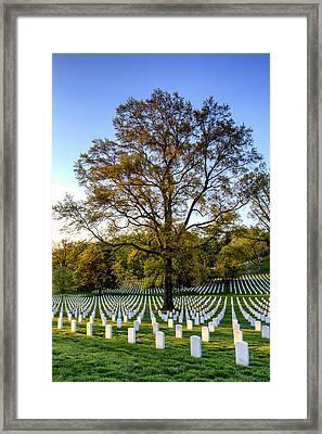 Morning Glory Framed Print by Edward Kreis