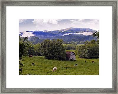 Morning Grazing Framed Print by Susan Leggett