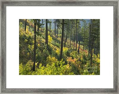 Morning Light Framed Print by Idaho Scenic Images Linda Lantzy