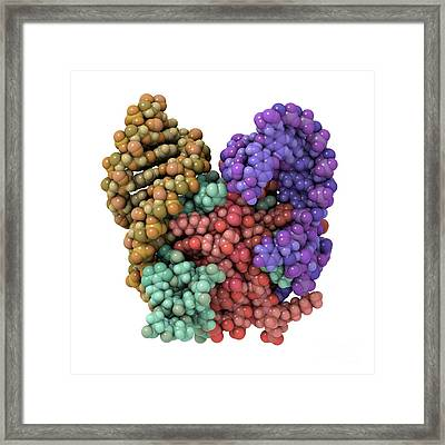 Mrna Recognition By Bacterial Repressor Framed Print by Laguna Design