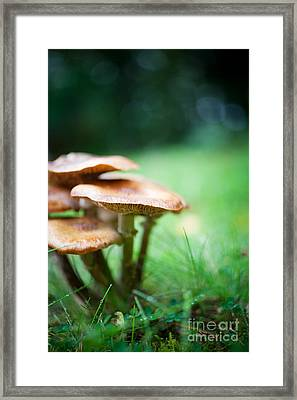 Mushrooms Framed Print by Kati Molin
