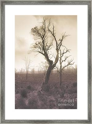 Mystery Tree In A Dark Scary Forest Framed Print by Jorgo Photography - Wall Art Gallery