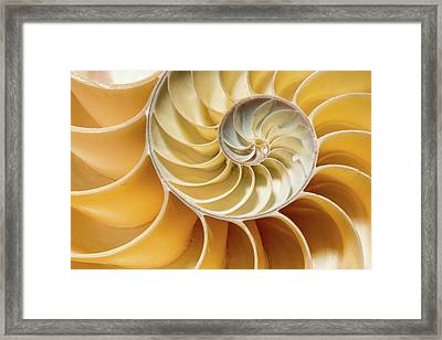 Nautilus Pompilius Framed Print by Natural History Museum, London