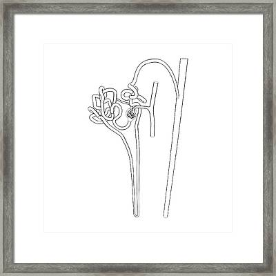 Nephron Structure Framed Print by Russell Kightley