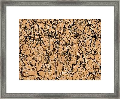 Nerve Cells Framed Print by Juan Gaertner