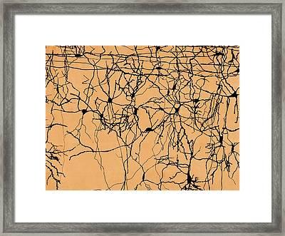 Neuron Network Framed Print by Juan Gaertner