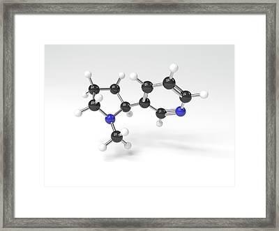 Nicotine Molecule Framed Print by Indigo Molecular Images