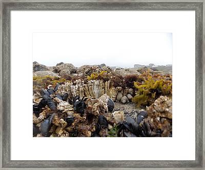 Nye Beach Framed Print by Roxanne Luckman