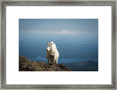 Olympic National Forest, Mount Ellinor Framed Print by Matt Freedman