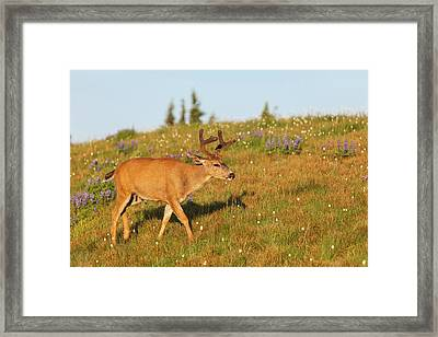 Olympic National Park, Hurricane Ridge Framed Print by Michael Qualls