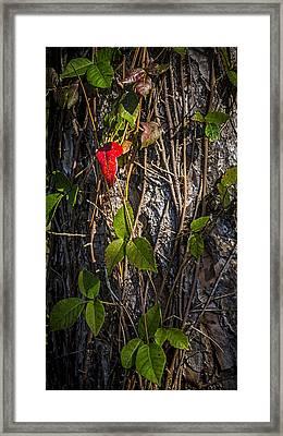 One Red Leaf Framed Print by Marvin Spates