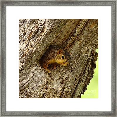 One Too Many Acorns Framed Print by Robert Frederick