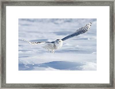 Onward And Upward Framed Print by Heather King