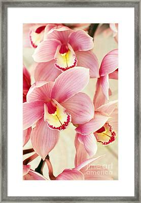 Orchids Framed Print by Carlos Caetano