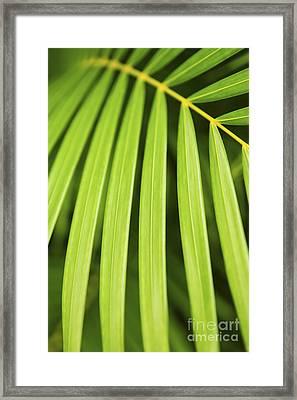 Palm Tree Leaf Framed Print by Elena Elisseeva