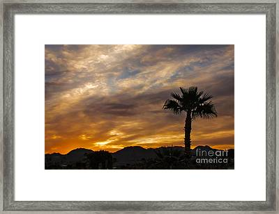 Palm Tree Silhouette Framed Print by Robert Bales