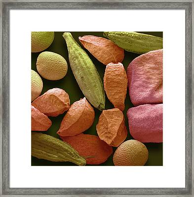 Panch Phoran Framed Print by Steve Gschmeissner